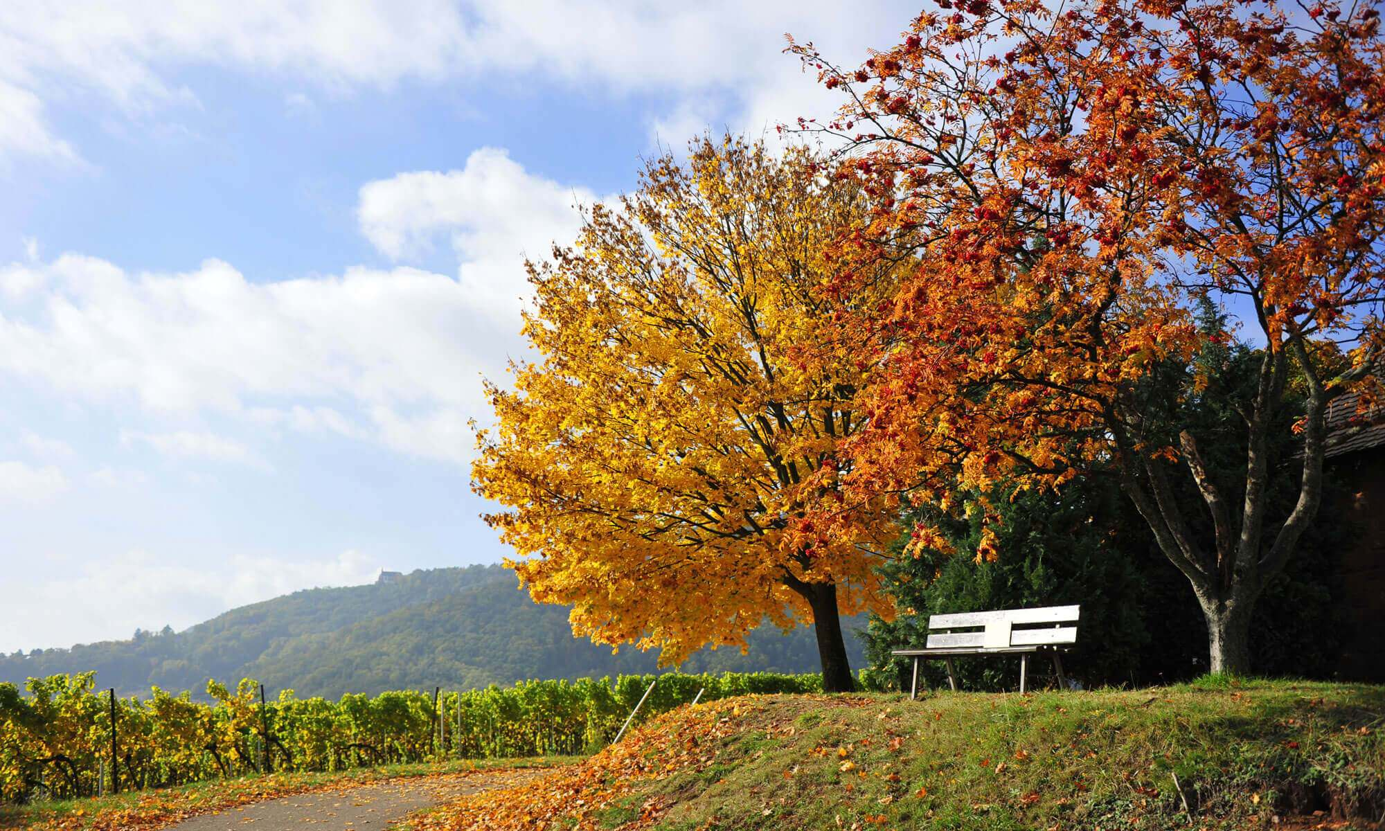 of colorful leaves in the Palatinate